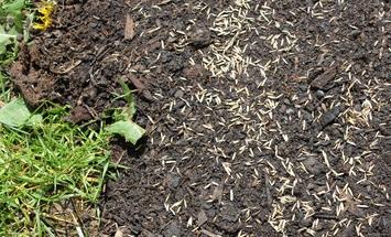 Säen und pflegen von Rasen